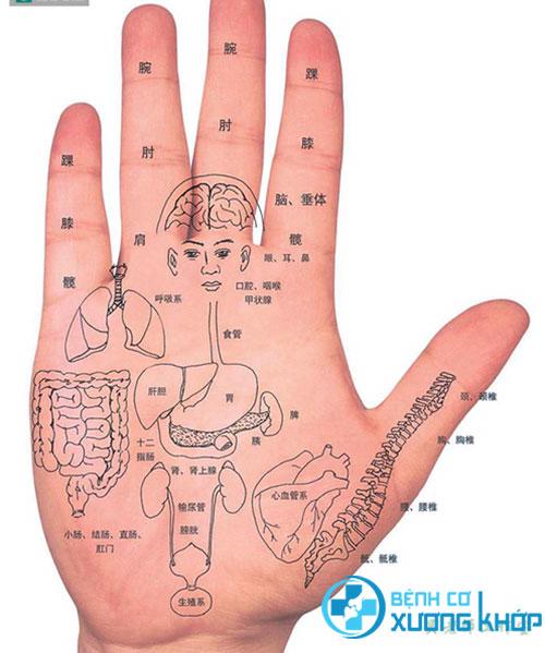 Các huyệt vị trên bàn tay đều có tác dụng đến cơ quan nội tạng