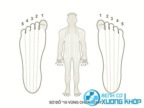 Mỗi vị trí ở chân lại đại diện cho một cơ quan trên cơ thể