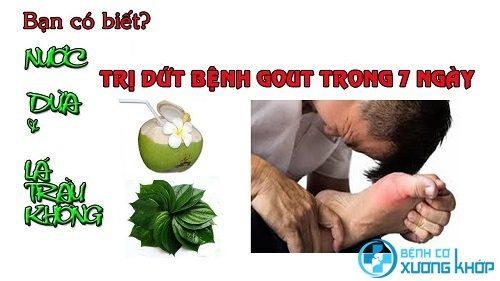 Hướng dẫn làm bài thuốc chữa bệnh gout từ lá trầu không và nước dừa