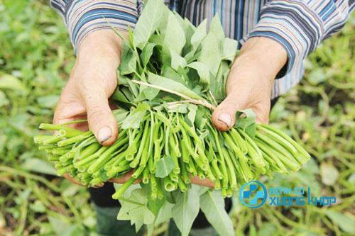 Mắc bệnh Gout có ăn được rau muống hay không?