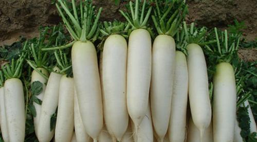 Củ cải rất tốt cho người bị viêm xoang